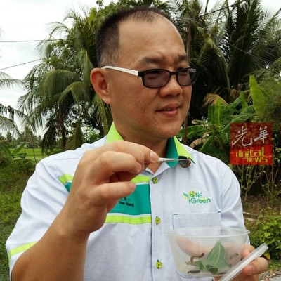 李衍旺博士出示其采集到的毛毛虫。