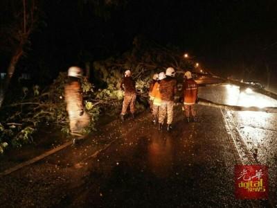 消拯人员正清理横陈在道路中央的倒树。