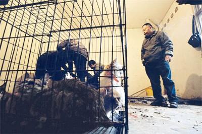 执法人员将现场猫只带走。