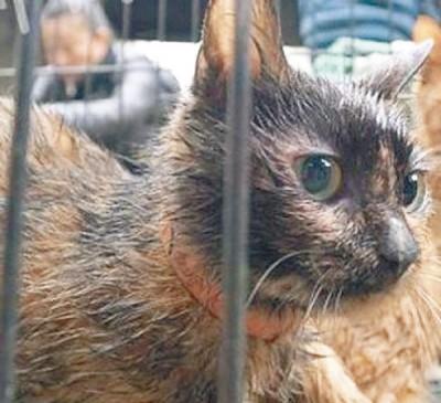 铁笼中的幸存小猫露出惊慌神情。