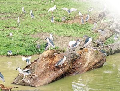 太平动物园也是旅客到太平首选之一。