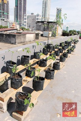 营员善用屋顶上的空地来种植蔬菜药草。