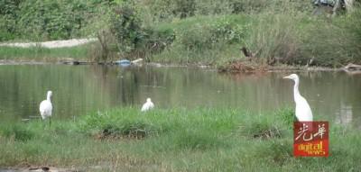 楣南吉辇河,在傍晚时分可看到候鸟戏水及在红树林栖息。