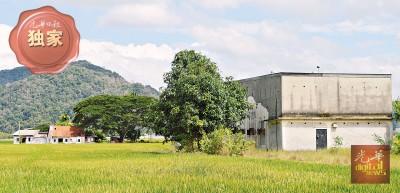 燕农黄木贵位于玻州对面港《天天好天》彩虹屋前的燕屋(右边),遭小偷闯入偷走燕窝和播音器。