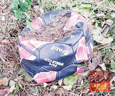 足球球员指有刺的大树导致足球爆破,用才提出移植老树的诉求。