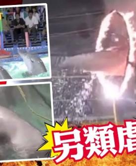 海豚被迫表演跳火圈及其他杂耍动作。(互联网图片)