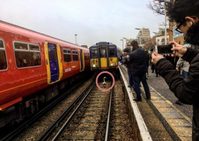 天鹅(红圈)以路轨上慢步。