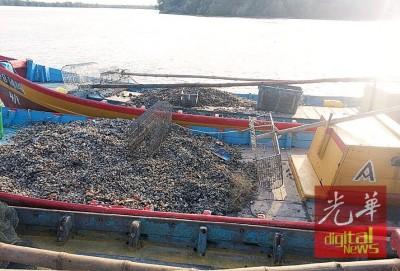 2只非法捞蚶渔船,于拖回古楼海事基地作进一步调查。