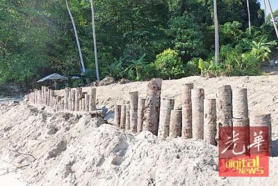 非法砍伐的椰树被砍分段成为防波墙结构。