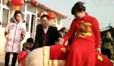 """张宪平(面临)出动""""华北猪上""""接新娘。"""