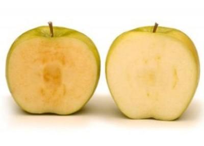 基因改造苹果(右)以及一般苹果切开后于。
