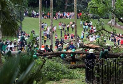 大树倒下后,民防部队及公园局派遣人员到场施救及清理树干。