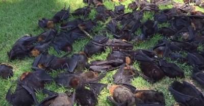 蝙蝠尸横遍野。