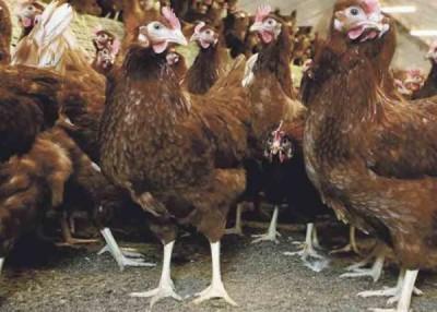 英国有农场发现H5N8禽流感病毒。