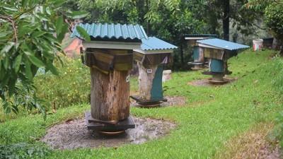 """王进财在山庄里建造了逾百座""""迷你木屋"""",饲养银蜂。一来可以食用其蜜糖,二来还可靠它们传播花蜜,有助植物繁殖生长。"""
