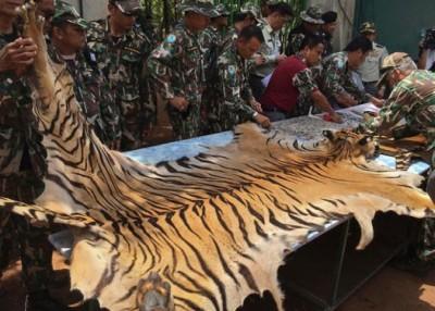 帕朗塔布寺涉嫌非法买卖老虎制品。
