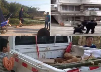 大钟村闹村民十分于疯狗症,公安部扑杀全镇狗只。