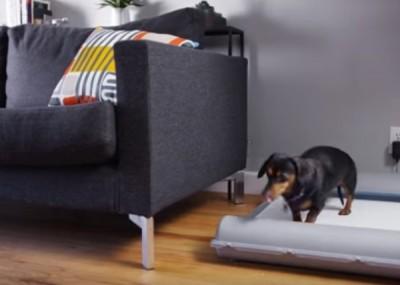 狗主只需按一下按钮,便盆内置的微型静音发电机就会转动滚轴。