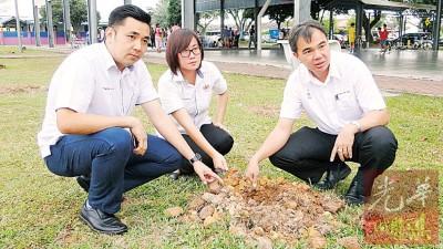 方美铼(左起)、王育璇和孙意志巡视雨伞树为挖走之处。