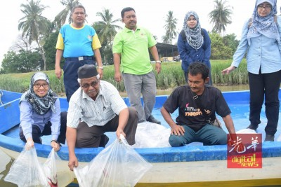 渔业局释放了8万虾苗到双溪哥乐河。