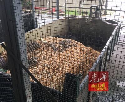 农场实拍自身农场孵出鸡蛋后,留存的蛋壳与正确处理方式。