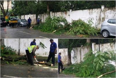 当局周一(20日)派员清理被狂风吹倒的大树。
