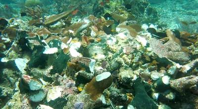 珊瑚礁受损。(法新社照片)