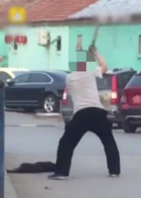 男子当街手持木棍疯狂挥打狗尸。