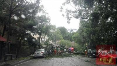 消拯员到玛尼斯路清理倒下的大树。
