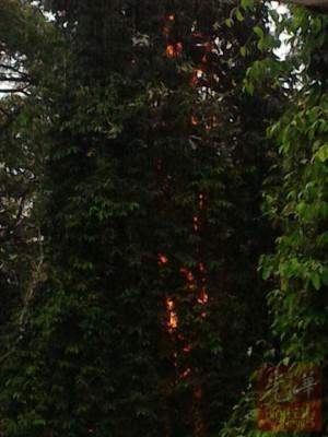 大树被雷电劈中后起火燃烧。