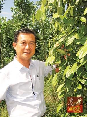 陈顺发喜见所种植的胡椒丰收。