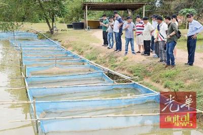 田贺忠向到访的养殖户讲解高配种金凤鱼的繁殖。