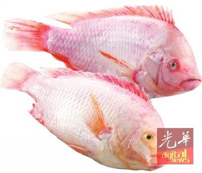 饲养金凤鱼被形容为有最高的市场经济效益。