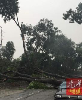 倒下的大树横跨双向车道。