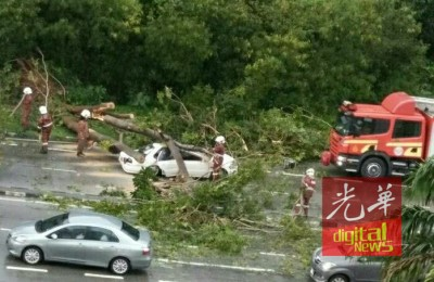 威拉轿车被倒下的大树压个正在。