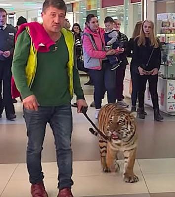 男子带着老虎游商场。