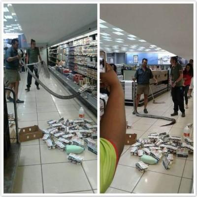 一名女子到超市买优格,竟摸到长达3公尺的非洲岩蟒蛇。