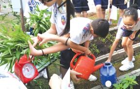 小朋友在菜畦收成后,也会学习如何收成、秤重与销售蔬菜,这有贯联性的教育课程,让孩子们轻松习得不同领域的知识。在校园农耕的过程,孩子们也学习到爱惜水资源的重要性,因此就连浇水都会小心翼翼地不浪费水源。