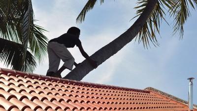 工作范围不包括让女佣爬树。