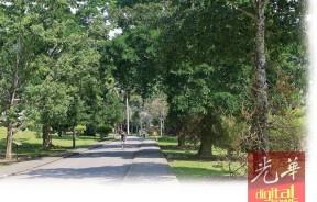 两旁茂密树林的植物园,不仅是作为一座公园,更能作为研究中心。