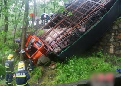 载有50头活猪的货车冲下路基,车上2人受伤,近半活猪死亡。