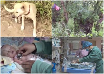小狗独自跑到一处偏僻的树林后不断用脚挖洞,拯救了一名被埋在土下的男婴。