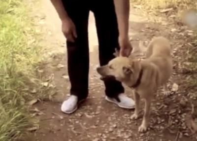 小狗成功救回男婴一命。