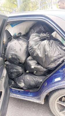 车后座载满黑色塑料袋装着的哥冬叶。