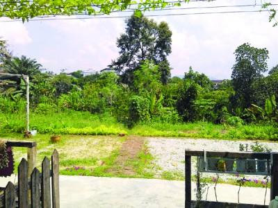 屋外那片天地,凡摆泰顺夫妇俩辛勤耕作的收获。