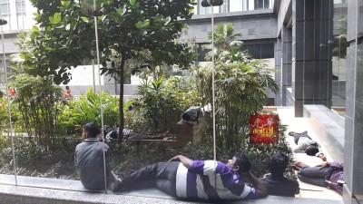 每当移民局花园里处处可见睡觉的客劳。