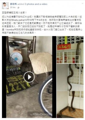 郭帟杋在脸书分享眼镜蛇王闯入住家的视频,吸引逾两百万人点击观看。