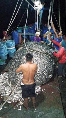 违规渔船捕获500公斤的鱼获,全被海事执法机构充公。