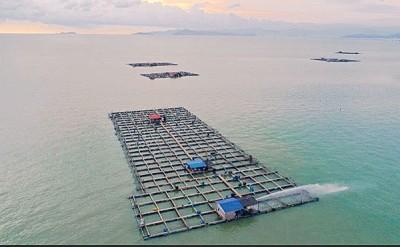 高渊港口海上箱网养鱼场。