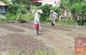一阵豪雨后冲走了萌芽的菜种,而今只能重新翻土播种耕种。